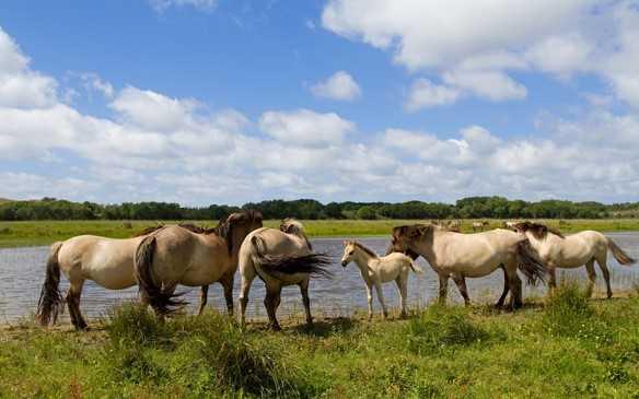 Nationaal Park Nieuwland