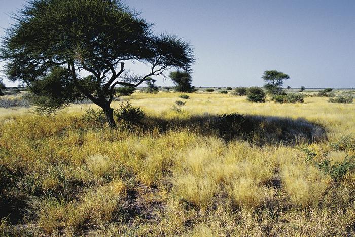 Kalahari Namibië